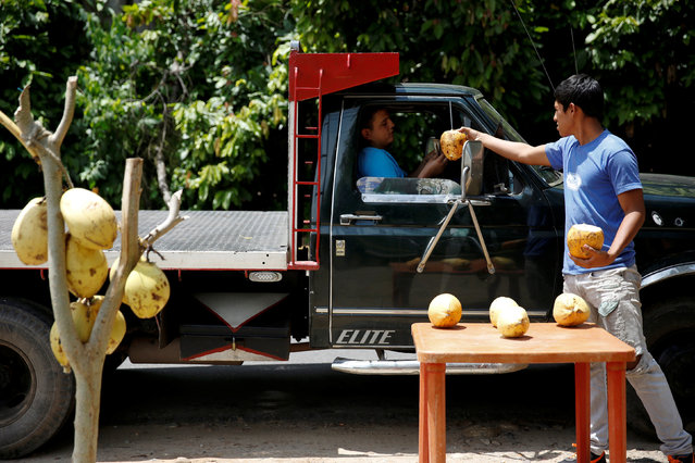 Josue Moreno, 19, gives a coconut to a customer at his street stall in La Fria, Venezuela, June 2, 2016. (Photo by Carlos Garcia Rawlins/Reuters)