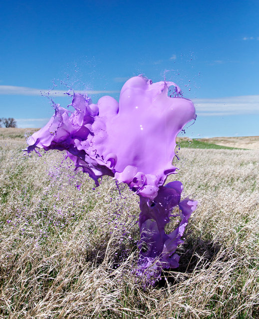 """Purple Grass"". (Photo by Floto/Warner)"