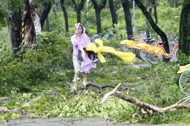 A woman walks past damaged trees as typhoon Soudelor hits Taipei, Saturday, August 8, 2015, in Taipei, Taiwan. (Photo by Chiang Ying-ying/AP Photo)