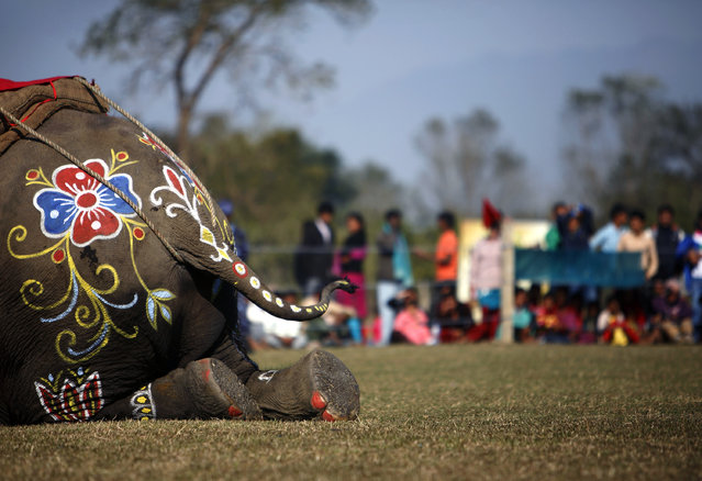 Decorations on an elephant are seen during an elephant beauty contest at the Elephant Race event in Chitwan, about 170 km (106 miles) south of Kathmandu December 27, 2012. (Photo by Navesh Chitrakar/Reuters)