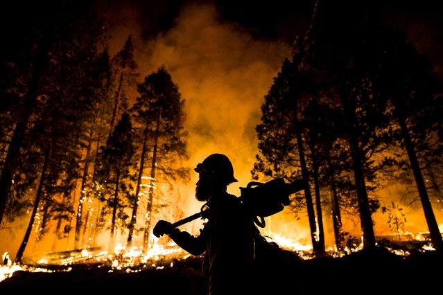 "Los Padres National Forest firefighter Jameson Springer watches a controlled burn on the so-called ""Rough Fire"" in the Sequoia National Forest, California, August 21, 2015. (Photo by Max Whittaker/Reuters)"
