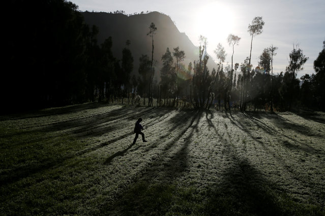A Hindu villager walks as he heads to Mount Bromo ahead of Kasada ceremony, when villagers and worshippers throw offerings such as livestock and other crops into the volcanic crater of Mount Bromo, in Probolinggo, Indonesia, July 20, 2016. (Photo by Reuters/Beawiharta)