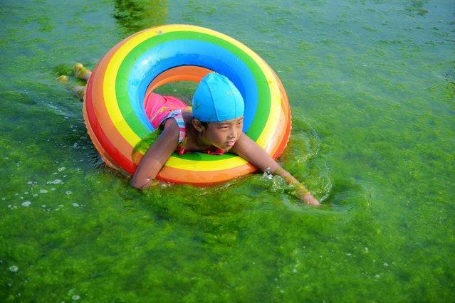 A child plays on sea grass at the beach, July 22, 2016, in Qingdao, China. The thick Ulva Prolifera algae spreads on the beaches each year. (Photo by VCG via Getty Images)