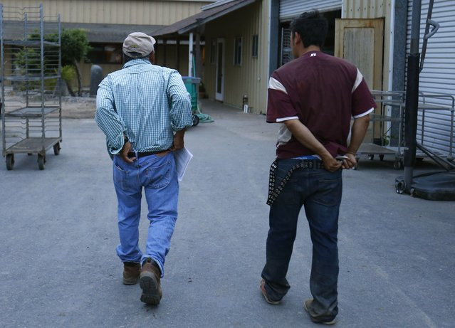 Farmer Tom Chino (L) and his son Makoto head off to work on the family's farm in  Rancho Santa Fe, California August 12, 2014. (Photo by Mike Blake/Reuters)