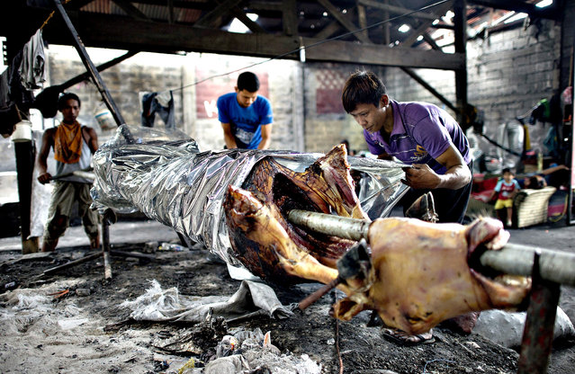 """Workers wrap an evenly cooked roasted calf to be delivered to a buyer in Manila on December 23, 2014, for the busy holiday season. """"Lechon"""", or roasted calf, has always been a regular fare at Philippine festivities, especially during Christmas and New Year celebrations. The Philippines Christmas season runs from December until the second week of January. (Photo by Noel Celis/AFP Photo)"""