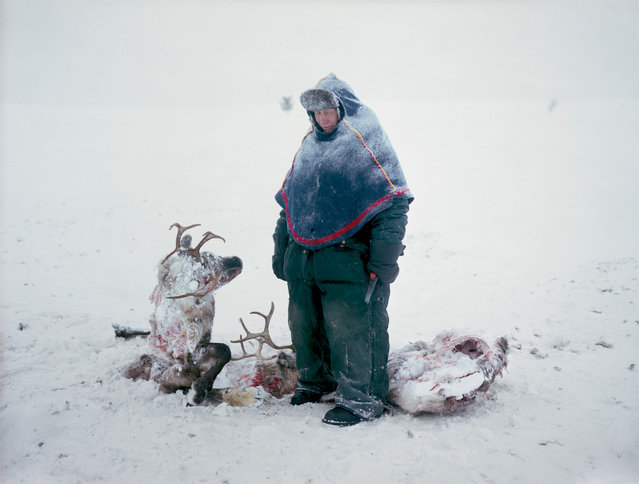 A Sami in Sweden mourns the loss of two reindeer that starved after locking horns in a fight for dominance, 2011. (Photo by Erika Larsen/National Geographic)