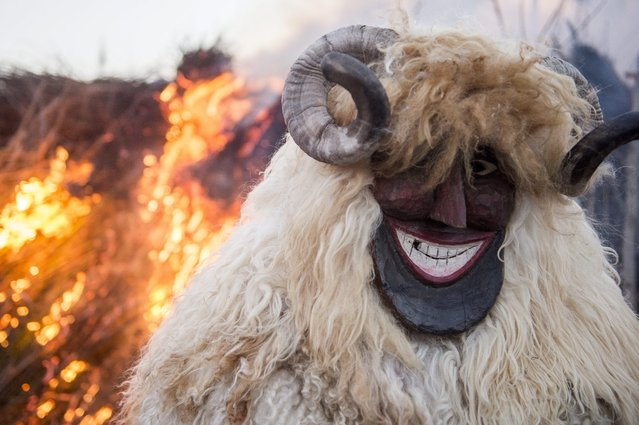 A man wearing a sheep fur costume with horns and mask stands in front of a huge bonfire in downtown Mohacs, some 210 km south of Budapest, Hungary, 15 February 2015, during the closing day of the annual Busho carnival parade. The traditional carnival marks the end of winter. (Photo by Tamas Soki/EPA)