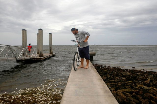 Boat Captain Bernie Vinoski looks at dead fish at Bay Vista Park, as Elsa strengthened into a Category 1 hurricane hours before an expected landfall on Florida's northern Gulf Coast, in St. Petersburg, Florida, U.S. July 6, 2021. (Photo by Octavio Jones/Reuters)