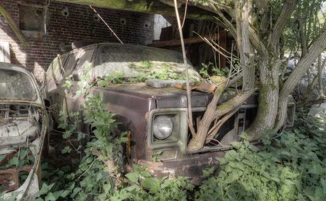 A tree has grown up and through this old American SUV which has greenery sprawled across its windshield. (Photo by Kenneth Provost/Mediadrumworld.com)