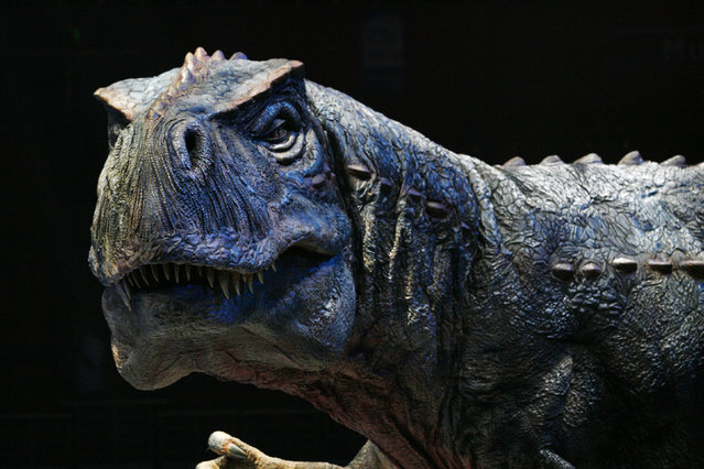 An animatronic model of a Tyrannosaurus performs in Sydney, January 10, 2007. (Photo by Tim Wimborne/Reuters)