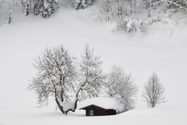 A litte cottage is covered with snow near Filzmoos, Austria, 08 January 2018. Media reports state that many regions in Austria, Germany, Switzerland and northern Italy have been affected by heavy snowfalls in the last days. About 12,000 tourists have been cut off in Austrian ski area due to weather conditions and avalanche risk. Meteorologists predict more significant snowalls in upcoming days in Germany, Austria and Switzerland. (Photo by Christian Bruna/EPA/EFE)