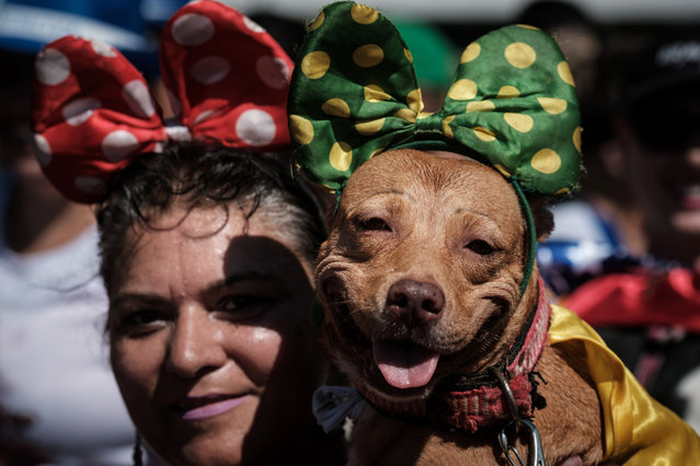 "A reveller holds her dog dressed in costume, during the Rio Dog Carnival, known as the Blocao – with ""bloco"" meaning street party and ""cao"" dog, during pre- carnival celebrations at Copacabana beach in Rio de Janeiro, Brazil, on February 19, 2017. (Photo by Yasuyoshi Chiba/AFP Photo)"