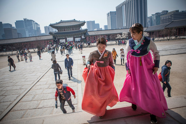 Young Korean women wearing  hanbok (Korean traditional dress) walk inside Gyeongbok Palace on March 27, 2016 in Seoul, South Korea. There has been a trend in recent years for the young Koreans to wear the traditional Korean dress, Hanbok. Wearing the traditional dress, they will walk around downtown Seoul on weekends taking selfies, and share their memories with friends on social media, and also to promote their traditional dress to foreign visitors. (Photo by Jean Chung/Getty Images)