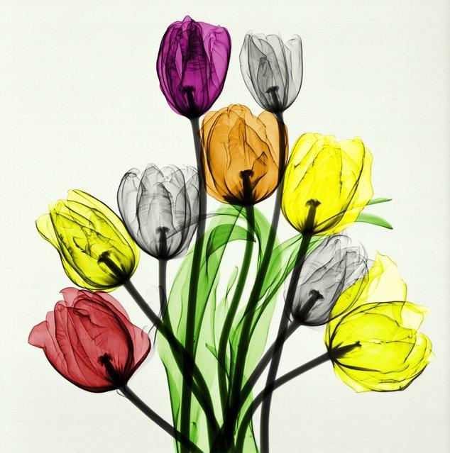 """Bouquet of Tulips"". (Photo by Arie van't Riet)"