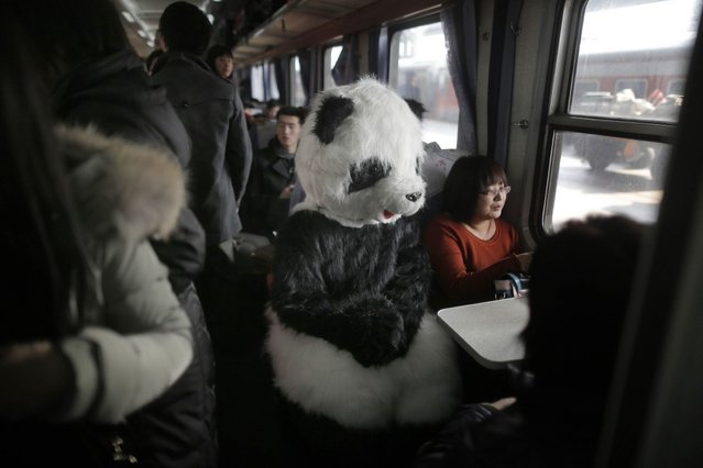 This picture taken on January 26, 2013, the first day of Spring Festival travel season, shows a lady wearing a panda constume (C) sits in her train back to Cangzhou in Hefei from Beijing. The lady, together with other three female friends, said she would like to feel the special atmosphere of the Spring Festival travelling in this way. (Photo by AFP Photo)