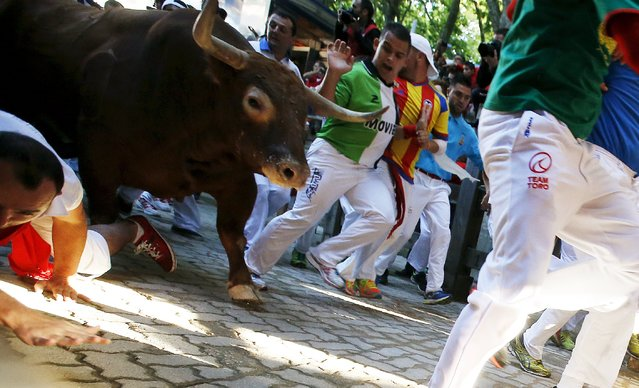 A runner falls near a Fuente Ymbro fighting bull at the entrance to the bullring during the fourth running of the bulls at the San Fermin festival in Pamplona, northern Spain, July 10, 2015. (Photo by Susana Vera/Reuters)