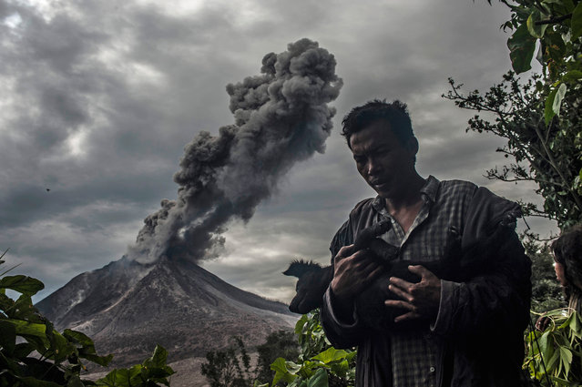 Mount Sinabung, a highly active volcano on Sumatra island, erupted several times this week. A volcanology agency has declared a danger zone of about four miles from the crater after seven farmers were killed and two others seriously injured. Here: A man carries his dog as a giant ash cloud rises from the Sinabung volcano in Karo, Indonesia on May 26, 2016. (Photo by Sutanta Aditya/Barcroft Images)