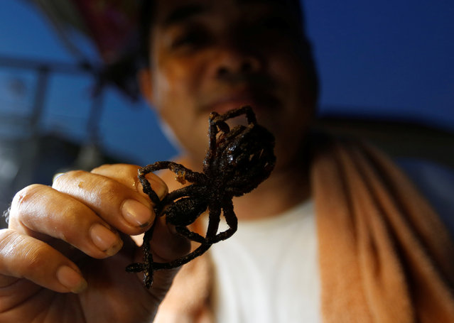 A vendor holds a fried spider along a street in Phnom Penh, Cambodia, April 10, 2017. (Photo by Samrang Pring/Reuters)