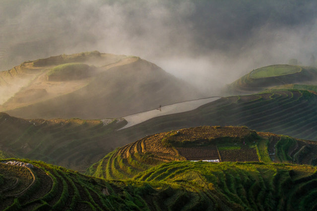 """Tilling in the Mist"". A lone farmer tilling his field at dawn at the rice terraces in Longji, China. The terraced fields are built along the slope winding from the riverside up to the mountain top, between 600 m to 800 m above sea level. The terraced fields were mostly built about 650 years ago. Photo location: Longji, Guangxi, China. (Photo and caption by Chaitanya Deshpande/National Geographic Photo Contest)"