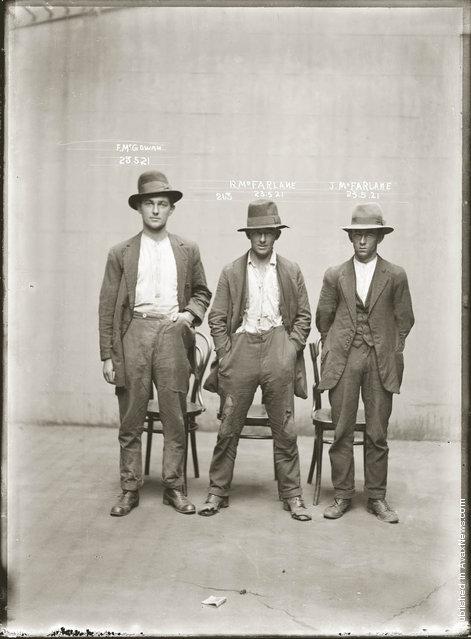 Mug shot of Frank McGowan, Robert McFarlane and John Dennis McFarlane, 23 May 1921, Central Police Station, Sydney