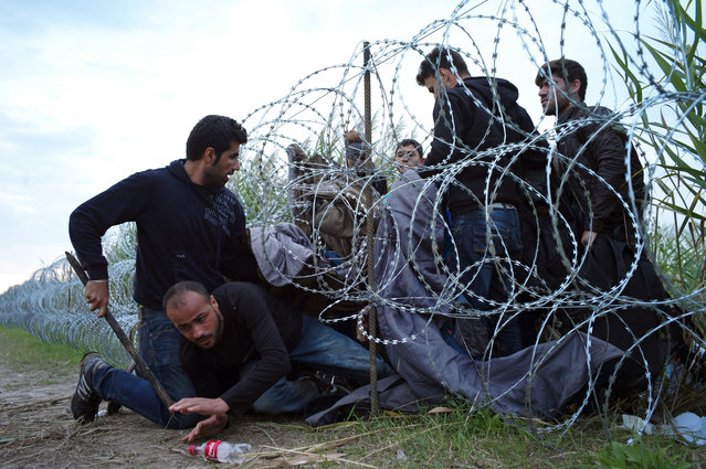 Syrian refugees cross into Hungary underneath the border fence on the Hungarian-Serbian border near Roszke, Hungary on August 26, 2015. The number of refugees entering Hungary has reached a new high as the government hurries to build a 4-meter (13-foot) fence on the Serbian border to stop them. (Photo by Bela Szandelszky/AP Photo)