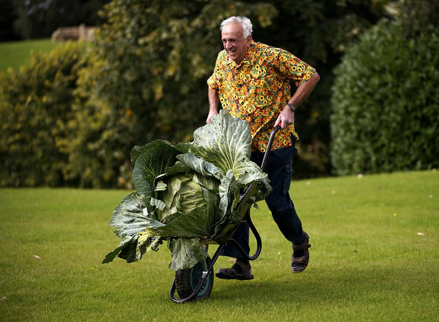 Giant vegetable grower Peter Ian Neale from Newport poses with his giant award winning cabbage that weighed in at 25.4kg at the Harrogate Autumn Flower Show on September 15, 2017 in Harrogate, England. Gardeners and horticulturalists from across Britain descend on the Yorkshire Showground every Autumn to show off their prized crops of vegetables, flowers and plants in the hope of a coveted award from the judges. The show which is organised by the North of England Horticultural Society is open to the public from 15-17 September. (Photo by Christopher Furlong/Getty Images)