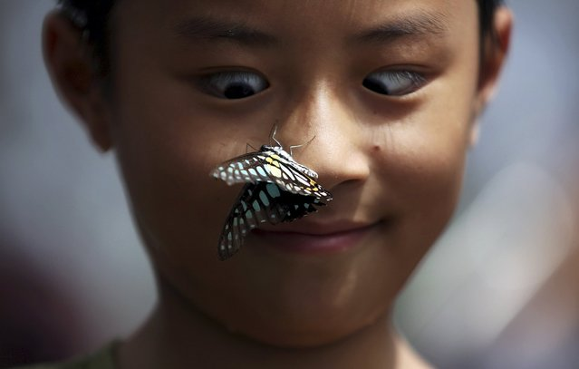A boy reacts as a butterfly stops on his nose during a butterfly exhibition at a park in Kunming, Yunnan province, China, September 26, 2015. (Photo by Reuters/Stringer)