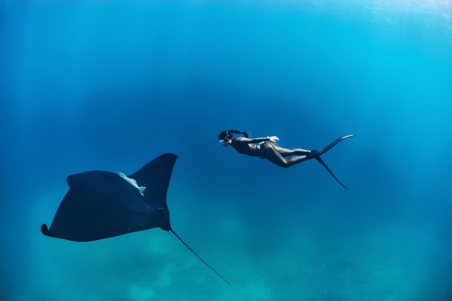 Amid the myriad blues of the ocean, freediver and conservationist Hanli Prinsloo swims close to a stingray. Prinsloo will be among the speakers at Steppes Travel Beyond, a two-day festival at the Royal Geographical Society on 17 and 18 September, 2016. Taking the theme of adventure, the event will hear from conservationists, wildlife experts and explorers, such as Ranulph Fiennes, Kenton Cool, Benedict Allen and Chris Packham, as well as photographers and authors. All proceeds go to charity. (Photo by Peter Marshall/Allen D. Walker/The Guardian)