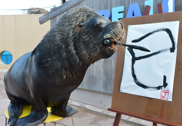 "Sea lion ""Jay"" paints a Chinese character reading ""the Serpent"" at the Hakkeijima Sea Paradise aquarium in Yokohama, suburban Tokyo on January 3, 2013. The event, marking the forthcoming Chinese lunar calender year of the snake was held as part of a New Year's attraction. (Photo by Kazuhiro Nogi/AFP Photo)"