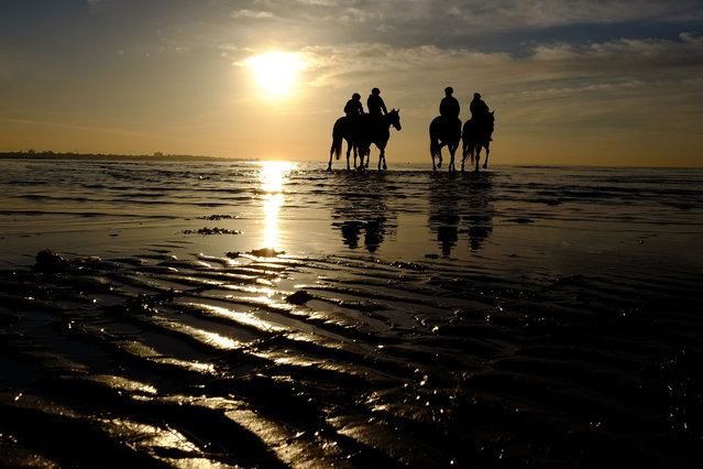 Gai Waterhouses horses Forever Loved, Sweet Idea, Diamond Drille and Travolta  during a trackwork session at Altona beach on October 31, 2014 in Melbourne, Australia. (Photo by Vince Caligiuri/Getty Images)