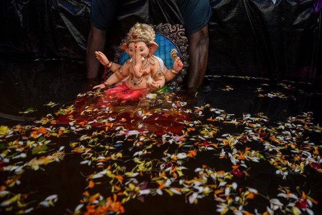 A volunteer immerses a clay idol of Hindu elephant-headed deity Ganesh in an artificial tank in Mumbai on August 23, 2020. India's much-loved Ganesha festival opened to a muted reception on August 22 as tough COVID-19 coronavirus restrictions prevented devotees from holding grand celebrations and carrying out traditional rituals to honour the Hindu elephant god. (Photo by Indranil Mukherjee/AFP Photo)