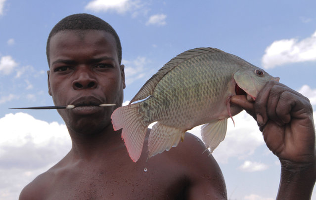 In this photo taken Wednesday October 29 2014, a fisherman poses with his catch on the shores of Lake Chivero, west of Harare. Illegal fishing can be hazardous in Zimbabwe, where poachers scan the banks for armed rangers and the water for crocodiles while they cast their rods. (Photo by Tsvangirayi Mukwazhi/AP Photo)