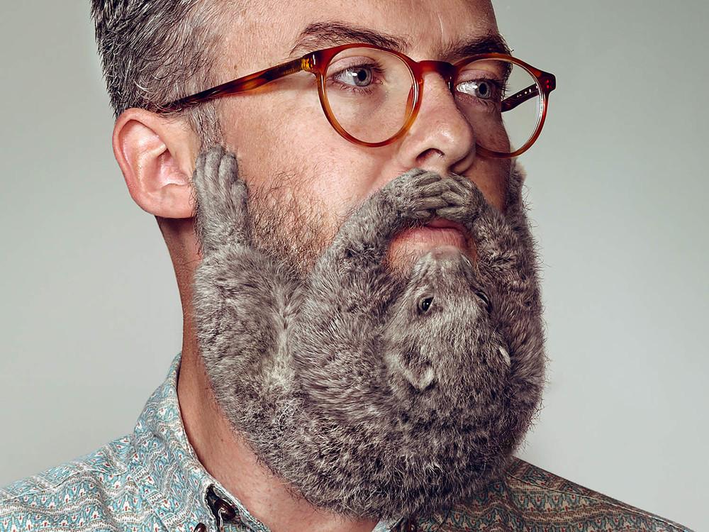 Animal Beards by David Kiefaber