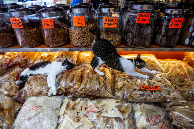 A cat stretches on top of dried seafood in a shop in the Sheung Wan district of Hong Kong on August 7, 2020. International Cat Day, celebrated on August 8, is a day to raise awareness for cats and learn about ways to help and protect them. (Photo by Isaac Lawrence/AFP Photo)