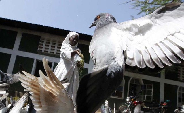 A member of the faithful feeds pigeons at the St. Peter's Legio Maria Manyatta church in the western town of Kisumu, 350km (218 miles) from the capital Nairobi, March 10, 2013. (Photo by Thomas Mukoya/Reuters)