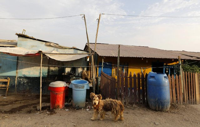 A dog stands next to water containers on an unpaved street at Nuevo Pachacutec shantytown on the outskirts of Lima's port of Callao December 11, 2014. Water will become scarcer in sprawling settlements such as Nuevo Pachacutec on the Pacific coast as the population of Peru's capital surges and global warming thaws Andean glaciers, reducing flows in coming decades as the ice disappears. (Photo by Mariana Bazo/Reuters)