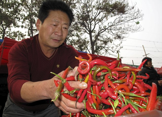 Li Yongzhi, 54-year-old former migrant worker, inspects a stock of chillis for a vendor at a market in Longhu township, Henan province, China, November 13, 2015. (Photo by Joseph Campbell/Reuters)
