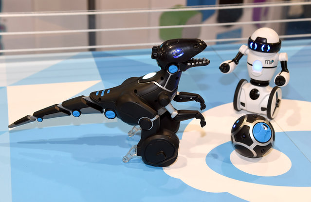 WowWee's new MiPosaur smart robotic creature (L) and the MiP balancing commercial robot are displayed at the 2015 International CES at the Sands Expo and Convention Center on January 6, 2015 in Las Vegas, Nevada. The MiPosaur comes with BeaconSense technology that allows it to chase around and play with a trackball that comes equipped with different modes. It can also be controlled by hand with GestureSense technology and will be available in August 2015 for USD 120. (Photo by Ethan Miller/Getty Images)