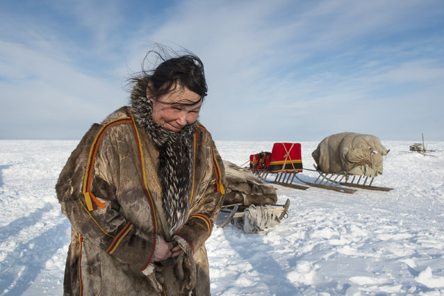 """""""Behind Polar Circle"""". Mother of family in a Nenets settlement on peninsula Yamal (Puassia) prepares plagues for stacking on нарты before перездом on a new pasture. (Photo and caption by Anatoly Strunin/National Geographic Traveler Photo Contest)"""