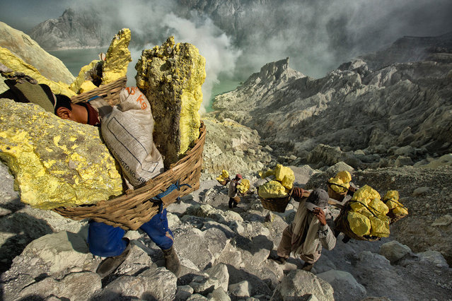 Sulphur miners haul sulphur up an arduous path out of Indonesia's Ijen volcano. The average carry out of the volcano is 70 kilograms per load per miner.  The all-time record carry was 120 kilograms in one load.  Extraordinary numbers given most of the miners only weigh around 55 kilograms.  Ijen volcano, Indonesia, 2012. (Photo by Hugh Brown/South West News Service)
