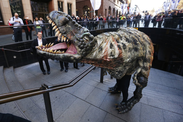 A performer dressed in a Tyrannosaurus rex dinosaur costume walks amongst pedestrians during a publicity event in central Sydney, August 28, 2013. (Photo by Daniel Munoz/Reuters)