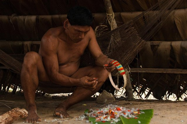 One tribesman was pictured decorating a colourful headdress. (Photo by Pete Oxford/Mediadrumworld.com)