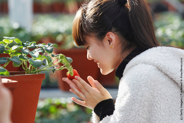 A girl looks at a new variety of strawberry at the 7th International Strawberry Symposium in Beijing