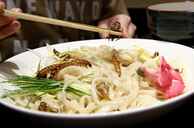"""A customer eats an """"Insect tsukemen"""" ramen noodle topped with fried worms and crickets at 'Ramen Nagi' restaurant in Tokyo, Japan April 9, 2017. (Photo by Kim Kyung-Hoon/Reuters)"""