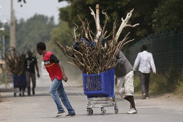 "Migrants transport firewood in a shopping cart in ""The New Jungle"" near Calais, France, August 1, 2015. Some 3,000 migrants live around the tunnel entrance in a makeshift camp known as ""The Jungle"", making the northern French port one of the frontlines in Europe's wider migrant crisis. (Photo by Pascal Rossignol/Reuters)"