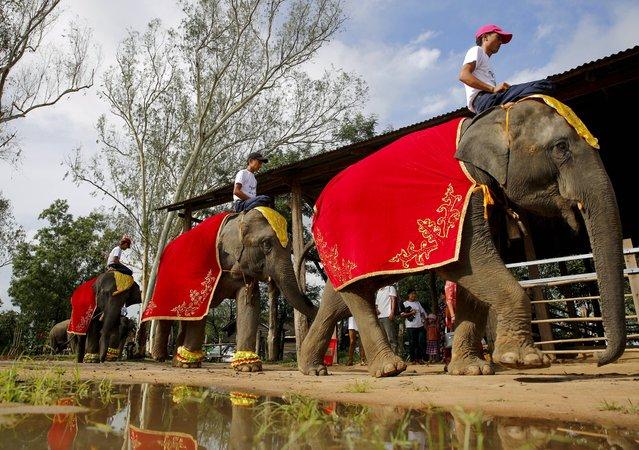 Elephants at Winga Baw Elephant Conservation Camp during the ceremony to mark World Elephant Day at Bago Region, Myanmar, 12 August 2017. (Photo by Lynn Bo Bo/EPA/EFE)