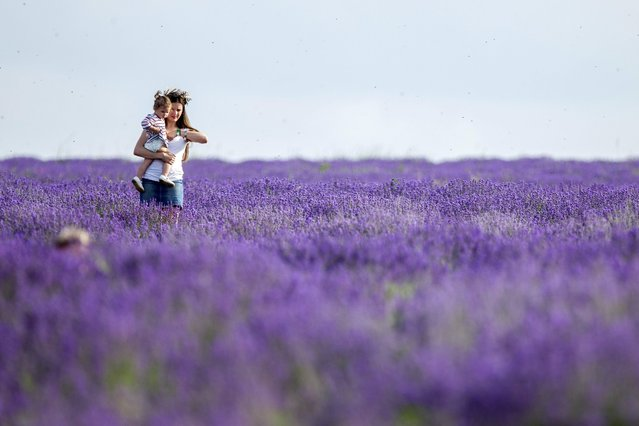 """A mother with her daughter walk in a lavender field at """"Lavender Fest"""" festival, held in a lavender field near Cobusca Noua village, 44 Km North-East from Chisinau, Moldova, 18 June 2016. """"Lavender Fest"""" is a natural event held for the second year in this place, dedicated to health and beauty coming from the nature, vegetarian food, as well as to the promotion of local brands and artisans. (Photo by Dumitru Doru/EPA)"""