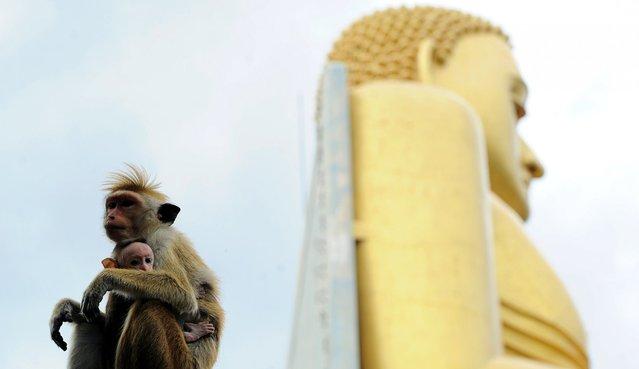 Monkeys sit at the Rangiri Dambulla Rajamaha Viharaya Buddhist pilgrimage site in Dambulla, Sri Lanka, August 29, 2014. The monkeys thrive in the holy area where devotees try to shoo off the animals from damaging ancient sites and religious symbols. (Photo by Ishara S. Kodikara/AFP Photo)