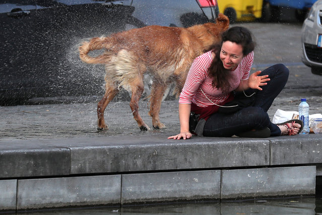 A woman is caught unexpectedly by a dog shaking off water after emerging from a canal in Brussels, Belgium August 17, 2016. (Photo by Clodagh Kilcoyne/Reuters)