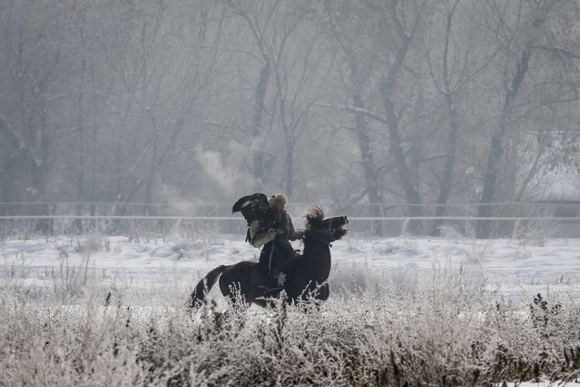A hunter with his tamed golden eagle rides a horse during an annual hunters competition at Almaty hippodrome, Kazakhstan February 9, 2018. (Photo by Shamil Zhumatov/Reuters)